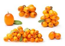 Olivello spinoso isolato Fotografia Stock