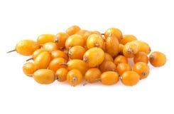 Olivello spinoso isolato su bianco Immagine Stock Libera da Diritti