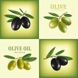 Olivenöl des Vektors Dekorativer Ölzweig Für Aufkleber Satz stock abbildung
