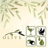 Oliven Stockbild