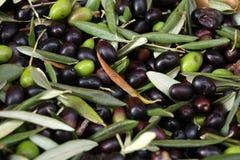 Oliven Lizenzfreies Stockbild