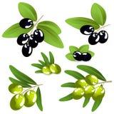 Oliven auf einem weißen Hintergrund Stockfotos