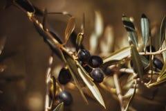 Oliven auf einem Zweig Lizenzfreie Stockfotos