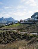 Oliven in der Landschaft von Zahara Lizenzfreie Stockfotografie