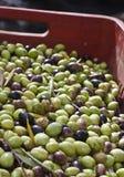 Oliven im Kasten Stockbilder
