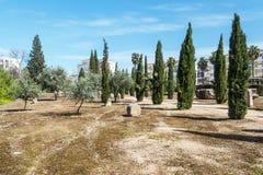 Oliven und Bäume stockfotografie