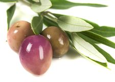 Oliven und Blätter stockfoto