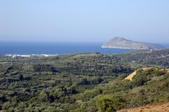 Olivenbäume Stockfoto