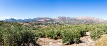 Olivenbäume, die zum Horizont in Andalusien erreichen Stockfoto