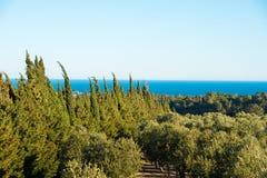 Olivenbäume im Garten gegen das Meer in Tarragona, Catalunya, Spanien Kopieren Sie Raum für Text Stockbilder