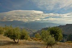 Olivenbäume mit Berglandschaft Sierre Nevada hinten unter einem blauen Himmel mit weichen Wolken Lizenzfreies Stockfoto