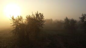 Olivenbäume mit starkem Nebel lizenzfreies stockfoto