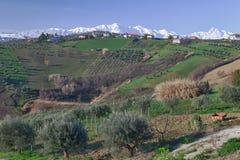 Olivenbaum und Berge Stockfoto