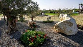Olivenb?ume und Blumen nahe dem Strand stock video