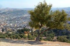 Olivenbaum über dem alten Medina von Fes Lizenzfreie Stockfotos