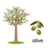 Olivenbaum Lizenzfreie Stockfotos