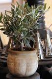 Olivenbaum stockfotos