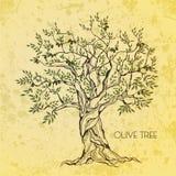 Olivenbaum auf Weinlesepapier Lizenzfreie Stockbilder