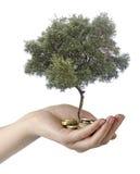 Olivenbaum in der Palme lizenzfreie stockfotos