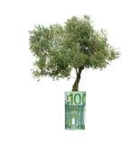 Olivenbaum, der von der Eurorechnung wächst stockfotografie