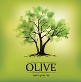 Olivenbaum des Aquarells In einer schönen Flasche gekleidet mit Gewürzen Für Aufkleber Satz stock abbildung