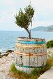 Olivenbaum in einem Fass Lizenzfreie Stockbilder