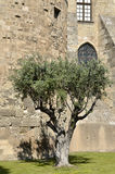 Olivenbaum in Frankreich Stockfoto