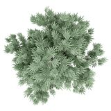 Olivenbaum lokalisiert auf Weiß Beschneidungspfad eingeschlossen lizenzfreie abbildung