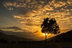 Olivenbaum silhouettiert gegen Sonnenuntergang in Korsika Stockfotografie