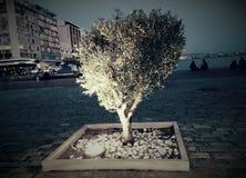 Olivenbaum am Stadtstrand Lizenzfreie Stockfotos