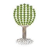 Olivenbaum - symbolische Zeichnung eines Olivenbaums Stockfoto
