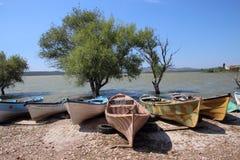 Olivenbaum und die Boote Stockfotografie