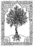 Olivenbaum und Rahmen stock abbildung