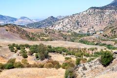 Olivenbaumfelder und -berge durch Montecorto, Spanien Lizenzfreie Stockfotos