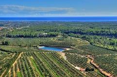 Olivenbaumgruppen in der Costa Daurada, Spanien Lizenzfreies Stockbild