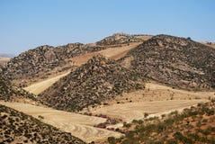 Olivenbaumgruppen und Berge, Andalusien, Spanien. Stockfoto