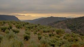 Olivenbaumion die Flanken von Sierra Nevada -Bergen lizenzfreies stockbild