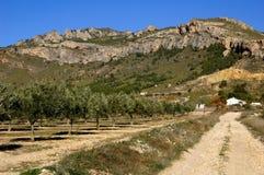 Olivenbaumplantage in Spanien Stockfotografie