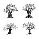 Olivenbaumschattenbildikonensatz lokalisiert auf weißem Hintergrund Ölvektorzeichen Erstklassiges Qualitätsillustrations-Logodesi stock abbildung
