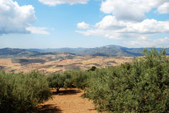 Olivenhaine und Berge, Periana Lizenzfreie Stockbilder