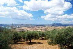 Olivenhaine und Berge, Periana Lizenzfreie Stockfotografie