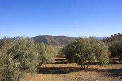 Olivenhaine und Berge von Andalusien in Süd-Spanien Stockfotografie