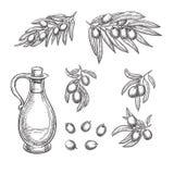 Olivenniederlassungen und Olivenöl skizzieren Vektorillustration Hand gezeichnete lokalisierte Gestaltungselemente stock abbildung