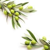 Olivenrahmenhintergrund Lizenzfreie Stockfotografie