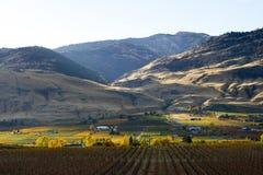 Oliver Okanagan Valley Vineyard British Colômbia Fotografia de Stock Royalty Free