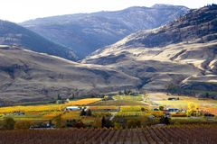 Oliver Okanagan Valley Vineyard British Colombia Fotografia Stock Libera da Diritti