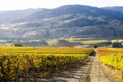 Oliver Okanagan Valley Vineyard British Colombie Images libres de droits