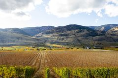 Oliver Okanagan Valley Vineyard British Colombie Photographie stock libre de droits