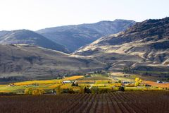 Oliver Okanagan Valley Vineyard British Columbia. Scenic autumn view of the rural landscape and vineyards of Oliver located in the Okanagan Valley of British Royalty Free Stock Photos