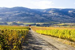 Oliver Okanagan Valley Vineyard British Columbia. Scenic autumn view of the rural landscape and vineyards of Oliver located in the Okanagan Valley of British Stock Image